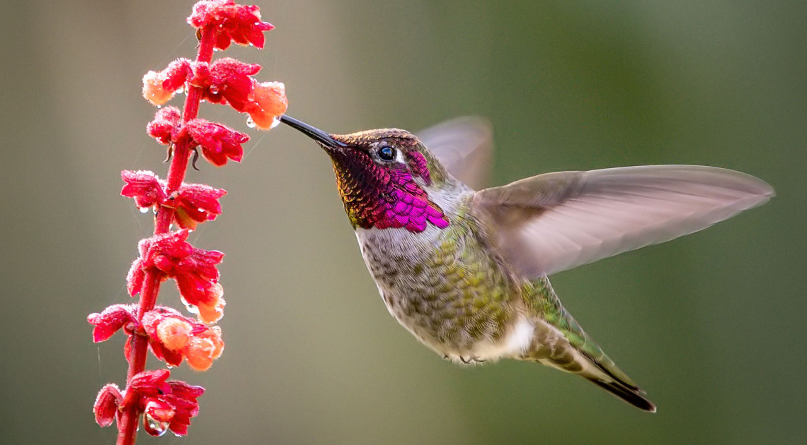 Nora Nadjarian: Kolibri