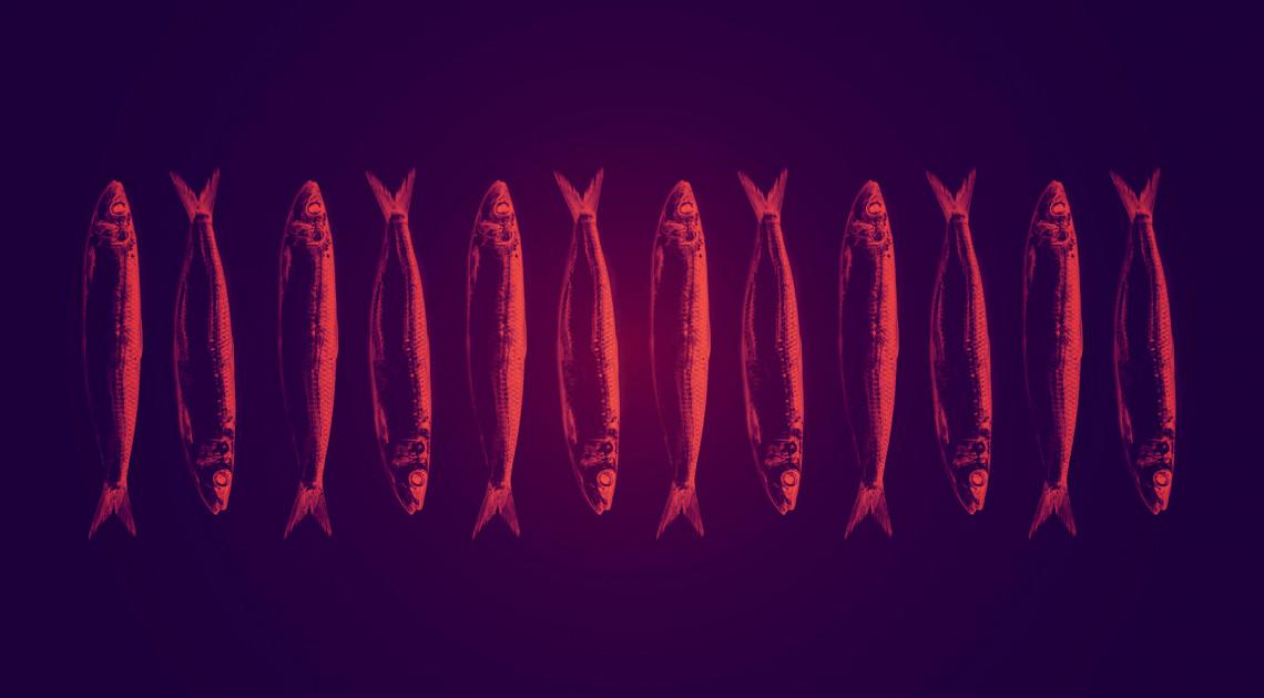 Harkaitz Cano: Tizenkét, fogyasztásra még éppen alkalmas szardínia